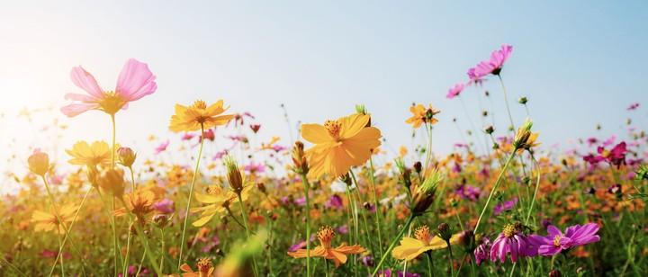 Biodiversität Nachhaltigkeit