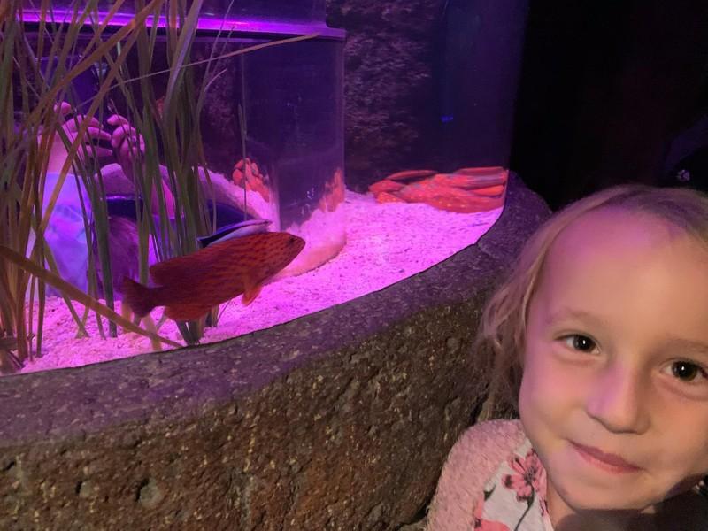 Erdbeerfisch Gewinner 10 2019